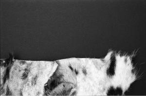 Lie Down, Get Up, Walk On (Snowleopard) 2, 2015