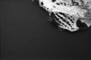 Lie Down, Get Up, Walk On (Snowleopard) 4, 2015